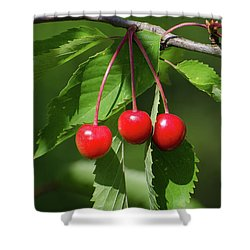 Shower Curtain featuring the photograph Red Delicious by Kennerth and Birgitta Kullman