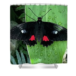 Red Design On Wings Shower Curtain