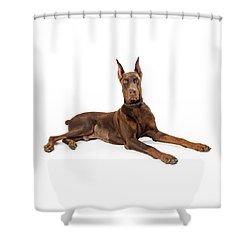 Red Doberman Pinscher Dog Lying Profile Shower Curtain