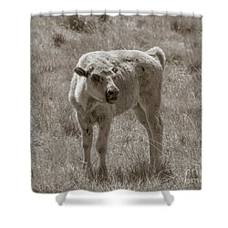 Shower Curtain featuring the photograph Red Dog Buffalo Calf by Rebecca Margraf