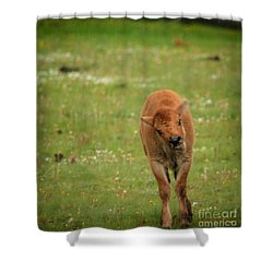 Shower Curtain featuring the photograph Red Dog by Robert Bales