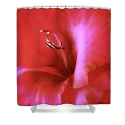 Red Dragon Gladiola Flower Shower Curtain by Jennie Marie Schell