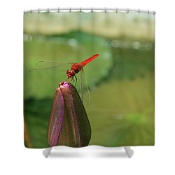 Red Dragonfly At Lady Buddha Shower Curtain