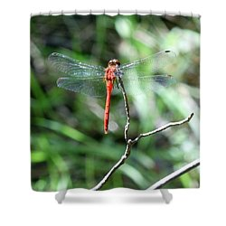 Shower Curtain featuring the photograph Red Dragonfly by Karen Silvestri