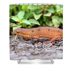 Red Eft - Close Up Shower Curtain by Kerri Farley
