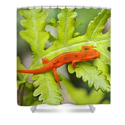 Red Eft Eastern Newt Shower Curtain by Christina Rollo