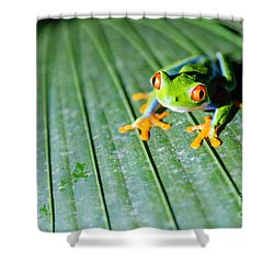 Red Eyed Frog Close Up Shower Curtain
