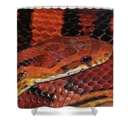 Red Eyed Snake Shower Curtain by Patricia McNaught Foster