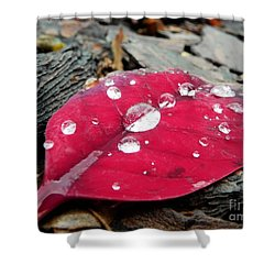 Red Fall Leaf Shower Curtain