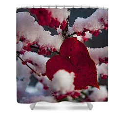 Red Fall Leaf On Snowy Red Berries Shower Curtain