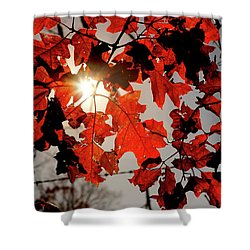Red Fall Leaves Shower Curtain