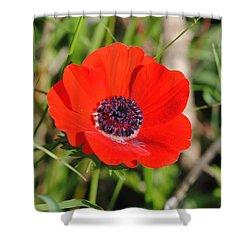 Red Anemone Coronaria 4 Shower Curtain