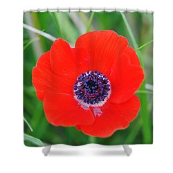 Red Anemone Coronaria 3 Shower Curtain