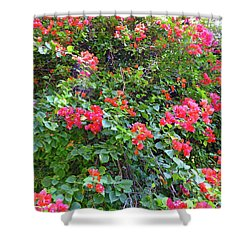Shower Curtain featuring the photograph Red Flower Hedge by Francesca Mackenney