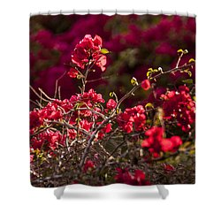 Shower Curtain featuring the photograph Red Flowering Quince Schrub by Daniel Hebard