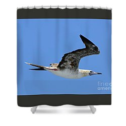 Shower Curtain featuring the digital art Red Footed Booby Bird 2 by Eva Kaufman