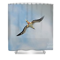 Red Footed Booby Bird 3 Shower Curtain by Eva Kaufman