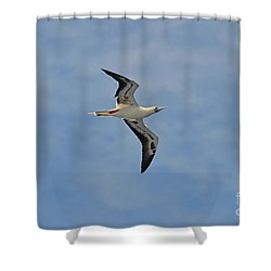 Red Footed Booby Bird 4 Shower Curtain by Eva Kaufman
