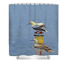 Shower Curtain featuring the digital art Red Footed Booby Bird by Eva Kaufman