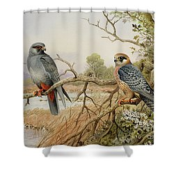 Red-footed Falcons Shower Curtain by Carl Donner