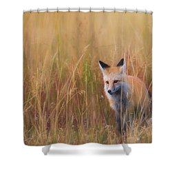 Shower Curtain featuring the photograph Red Fox Hunting  by Kelly Marquardt