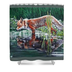 Red Fox Reflecting Shower Curtain