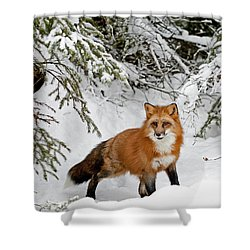 Red Fox In Winter Shower Curtain