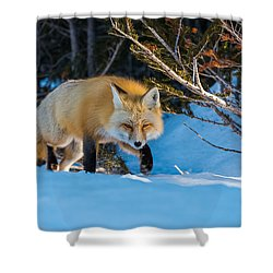 Shower Curtain featuring the photograph Red Fox In Winter Snow by Yeates Photography
