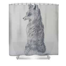 Shower Curtain featuring the drawing Red Fox by Laurianna Taylor
