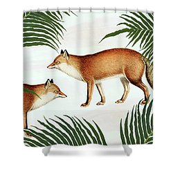 Red Fox Pair Shower Curtain