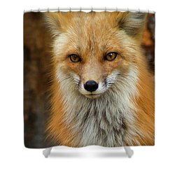 Red Fox Portrait Shower Curtain by John De Bord