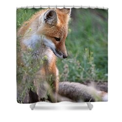Red Fox Pup Outside Its Den Shower Curtain by Mark Duffy