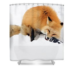 Red Fox To Base Shower Curtain