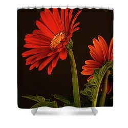 Red Gerbera Daisy 1 Shower Curtain by Richard Rizzo