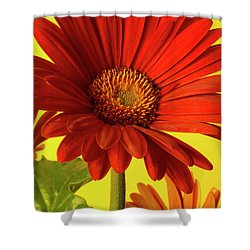 Red Gerbera Daisy 2 Shower Curtain by Richard Rizzo