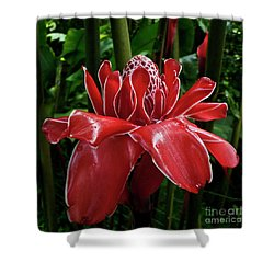 Red Ginger Lily Shower Curtain by Heiko Koehrer-Wagner