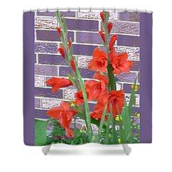 Red Gladiolas Shower Curtain