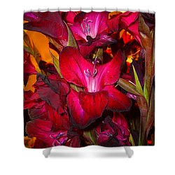 Red Gladiolus Macro Photograph Shower Curtain by Merton Allen