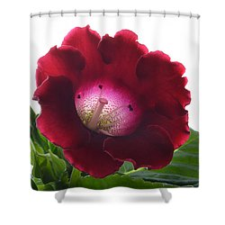 Red Gloxinia. Shower Curtain