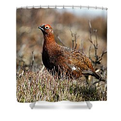 Red Grouse Shower Curtain