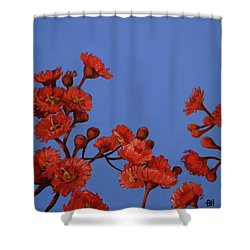 Red Gum Blossoms Shower Curtain