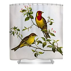 Red Headed Bunting Shower Curtain by John Gould