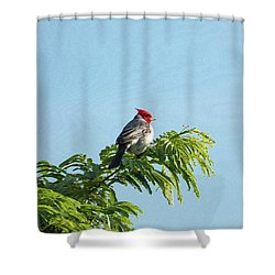Red-headed Cardinal On A Branch Shower Curtain