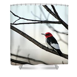 Red-headed Woodpecker Shower Curtain