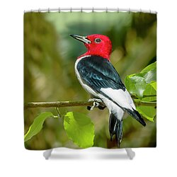 Red-headed Woodpecker Portrait Shower Curtain