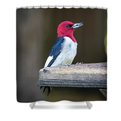 Shower Curtain featuring the photograph Red-headed Woodpecker With Seed  by Ricky L Jones