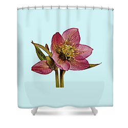 Red Hellebore Blue Background Shower Curtain