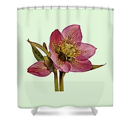 Red Hellebore Green Background Shower Curtain