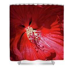 Red Hibiscus Shower Curtain by Judy Johnson