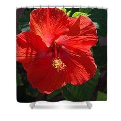 Red Hibiscus Shower Curtain by Susanne Van Hulst